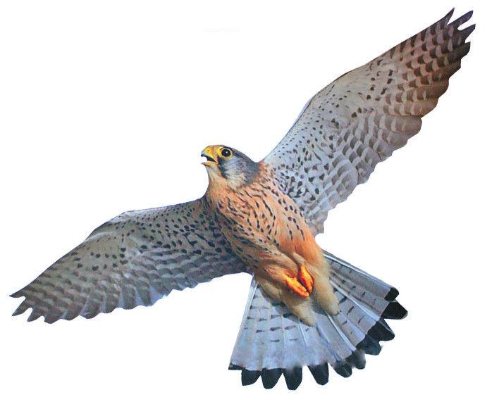 Отпугиватель птиц визуальный